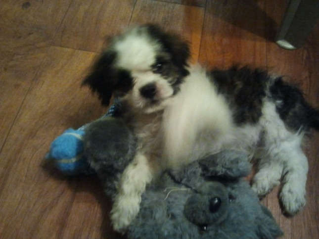 Mr. Winston the Puppy Copyright SER May 2012 WatchUsPlayGames
