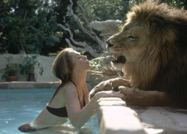 Adult Girl Tippie. Woman Now At 20. Feeding Water To Lion Named Neil