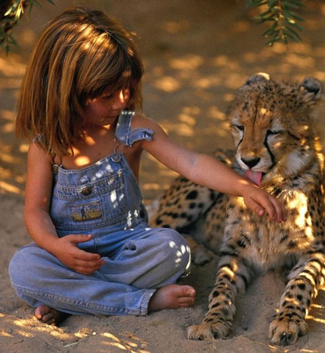 Tiger Licks Little Girl Tippi Africa