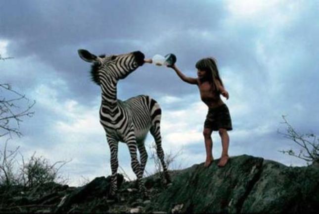 Tippi of Africa Feeding Zebra
